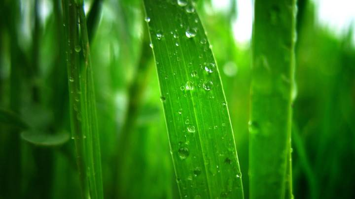 Green Leaves And Water Drops On It